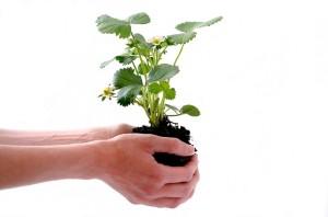 Planta sostenida con la raiz por unas manos