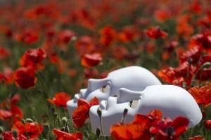 Mascaras blancas sobre flores rojas